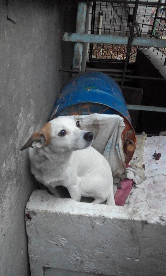 У Черкасах собака шукає господаря