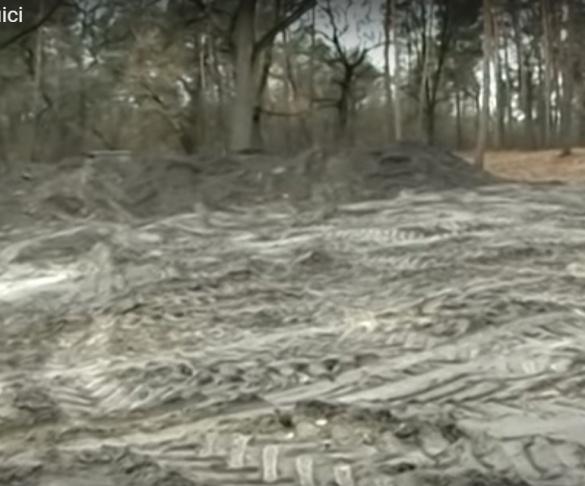 У Черкасах столітні дуби та сосни пустили під вирубку