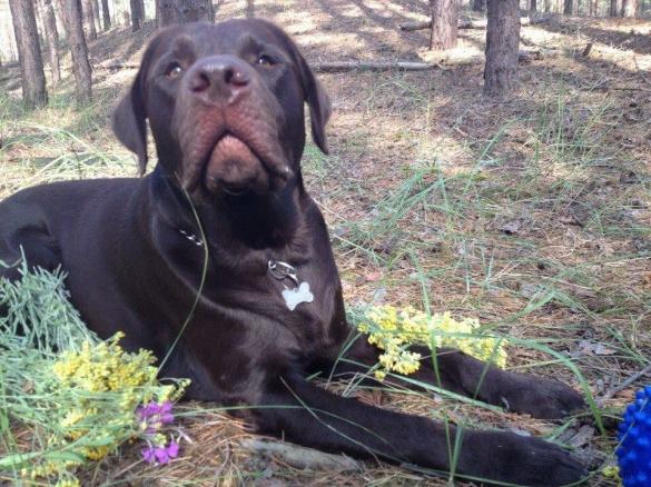 У черкаської журналістки вкрали собаку. Допоможіть знайти!