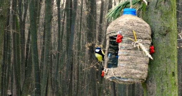 У Черкасах зуміли врятувати пташок від голоду