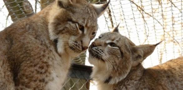 Черкаський зоопарк – один з кращих в Україні