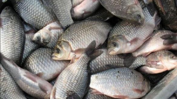 На Черкащині молодий браконьєр наловив риби на понад 7 тисяч гривень