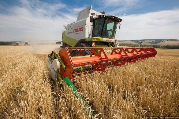 Черкаські аграрії – у п'ятірці лідерів у країні