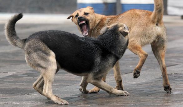 На Черкащині жителі міста страждають від нападів безпритульних собак
