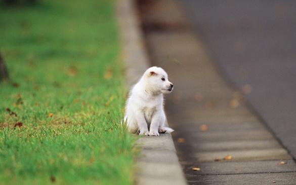 Три місяці пес чекає господаря біля дороги на Черкаси