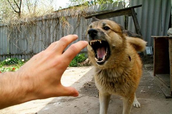Неприв'язані собаки лякають черкаських контролерів та не реагують на засоби захисту