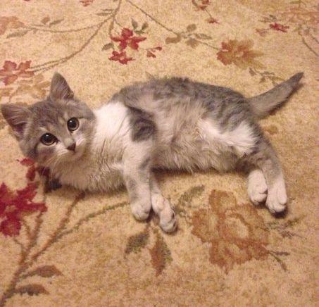 У Черкасах шукають нового господаря для котика