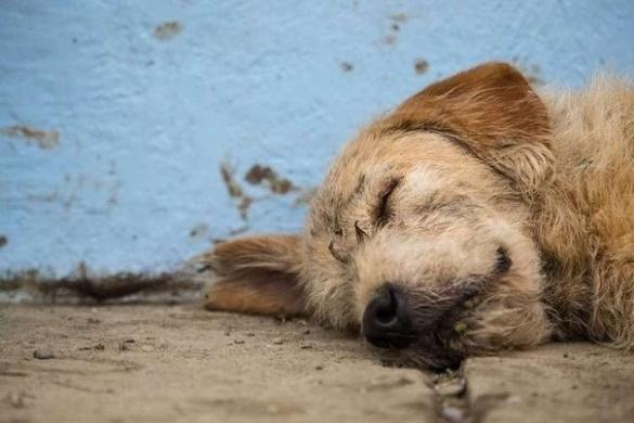 У Черкаській області жорстоко вбивають безпритульних собак