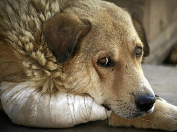 Безпритульних собак у Черкасах з кожним роком стає все більше