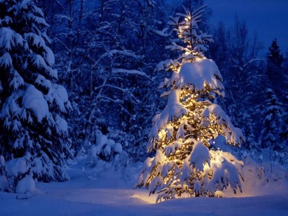 Черкащани хочуть на Новий рік живу ялинку, тому що вона пахне святом