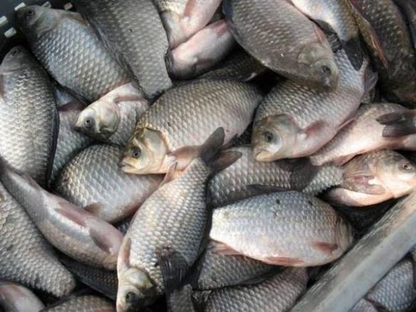 Черкаські браконьєри ловили рибу