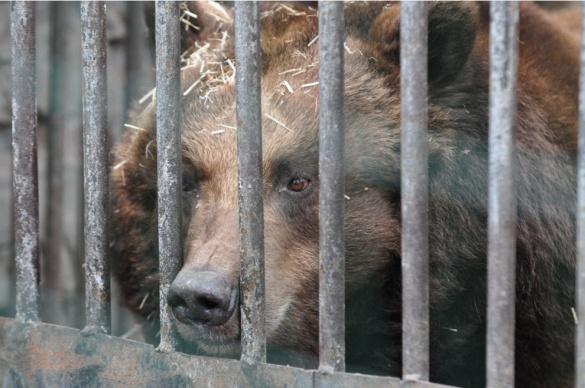Через теплу зиму у черкаському зоопарку прокинулася ведмедиця