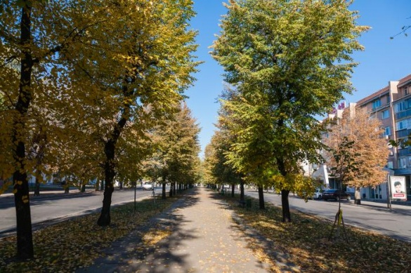 Якою має бути алея бульвару Шевченка вирішуватимуть черкащани