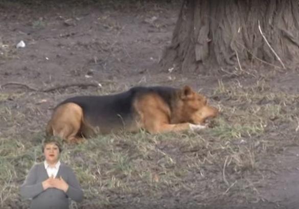 Масове отруєння безпритульних собак у Смілі шокувало людей