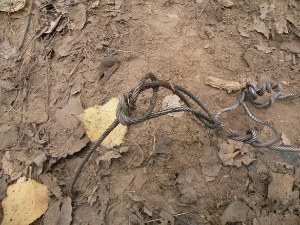 На Черкащині браконьєри жорстоко полюють на диких звірів
