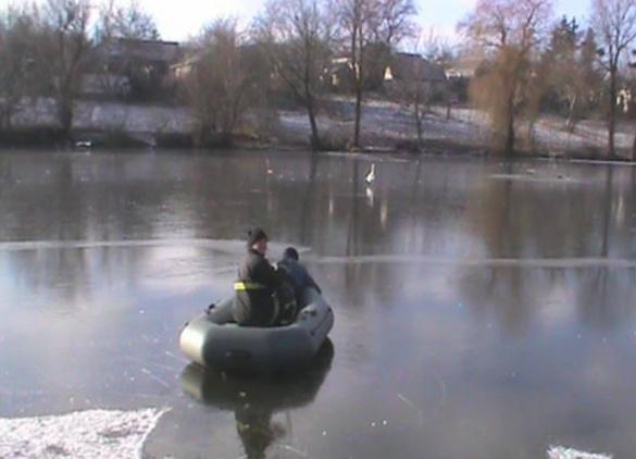 На Черкащині врятували примерзлого до криги лебедя