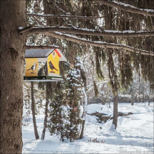 Черкаські синоптики спрогнозували погоду на Різдво