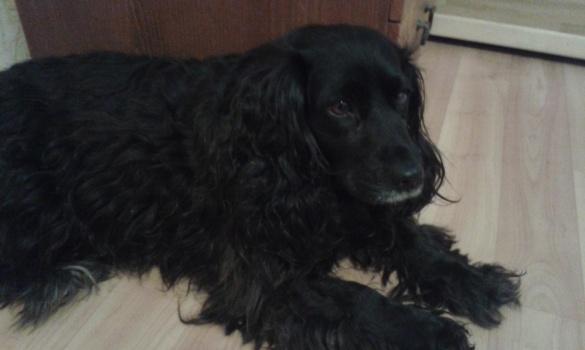 У Черкасах розшукують господарів загубленої собаки
