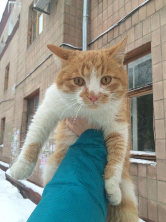 У Черкасах шукають господарів рудого кота