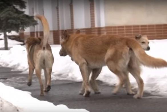 Черкаській владі не цікаві хворі чи агресивні собаки