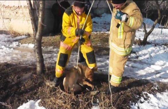 На Черкащині люди намагалися витягти собаку з технічного колодязя