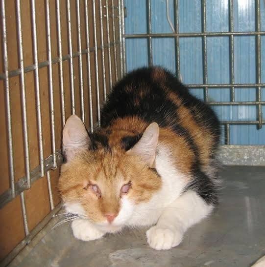 Незвичайна кішка із Черкас шукає нових господарів