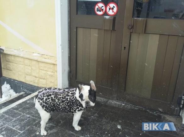 Черкащани показали, які ввічливі у них собаки