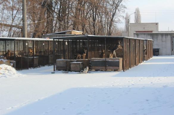 У мережі з'явилося зворушливе відео про мешканців черкаського притулку для собак