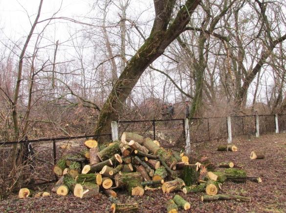 Із черкаського парку вирубують та вивозять дерева