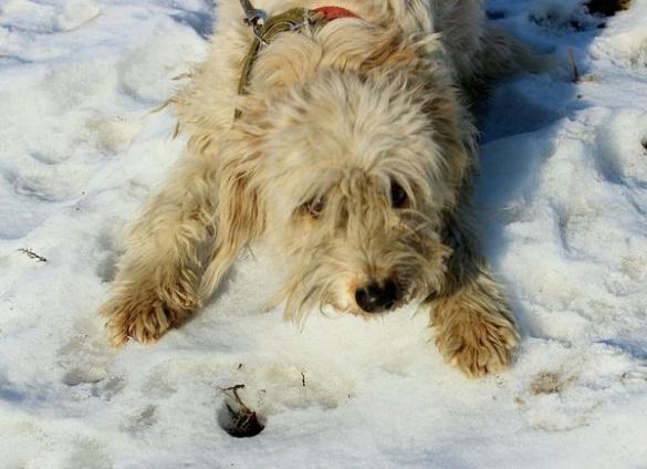 У Черкасах шукають новий дім для милої собаки
