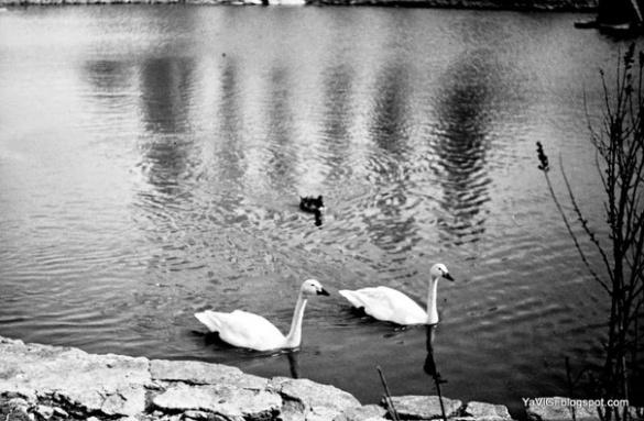 Яким був черкаський зоопарк на початку 80-х років (ФОТО)