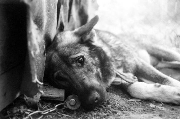 У Черкаській області мисливці у середмісті розстрілюють собак
