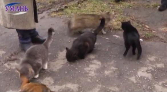 Безпритульні коти посварили дві уманські сім'ї (ВІДЕО)