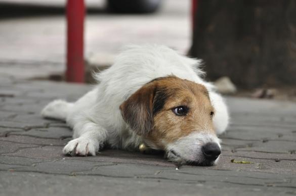 У Черкасах знову труять безпритульних собак (ВІДЕО)