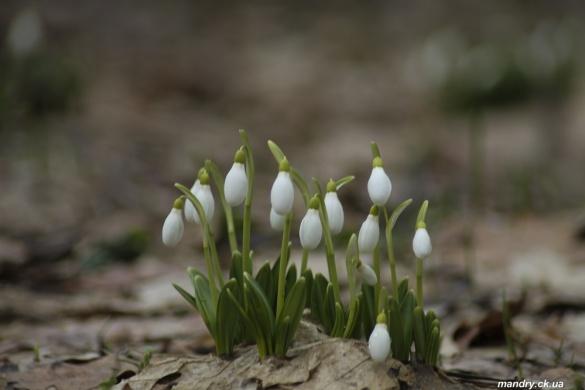 Черкащанин показав дивовижні фото весни у Холодному Ярі (ФОТО)