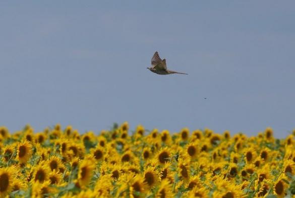 Черкащанка знімає дивовижних птахів по всій Україні (ФОТО)