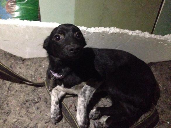 Черкащани шукають власника собаки, що загубилася