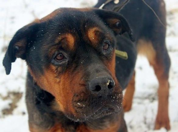 Виснажену голодом собачку рятують у Черкасах