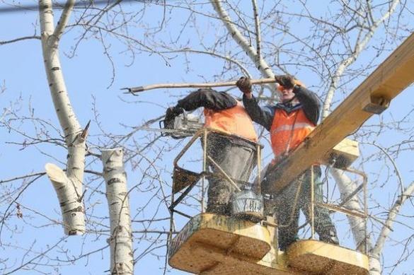 Біля черкаського ЦДЮТ обрізають дерева, нехтуючи правилами техніки безпеки