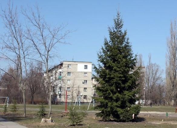 П'ятиметрова ялинка в Каневі знайшла нове місце для домівки (ФОТО)