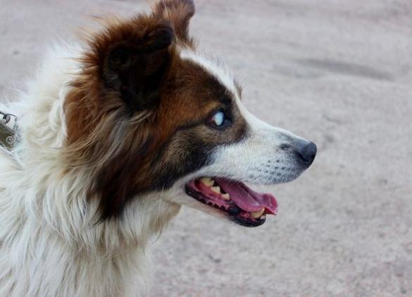 У Черкасах сліпий песик шукає новий дім (ФОТО)