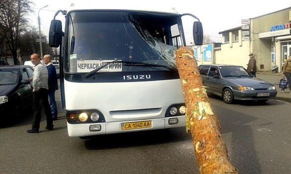 У Черкасах на маршрутку впало дерево