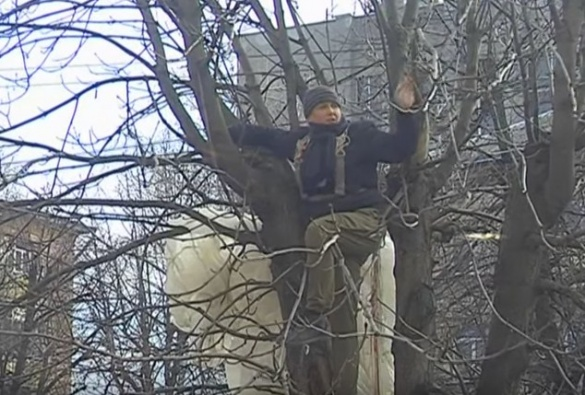 На дереві у центрі Черкас застряг