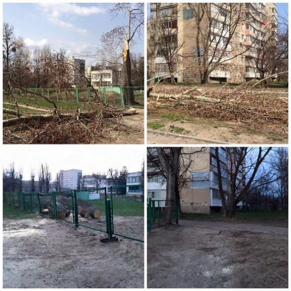 Біля дитячого садка на вулиці Момота впало дерево (ФОТО)