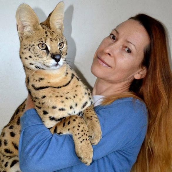 Павуки та африканські коти: черкащани тримають удома екзотичних тварин