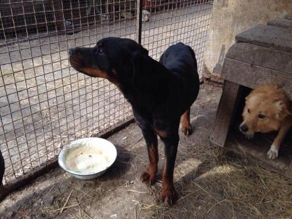 У Черкасах розшукують господарів породистої собаки
