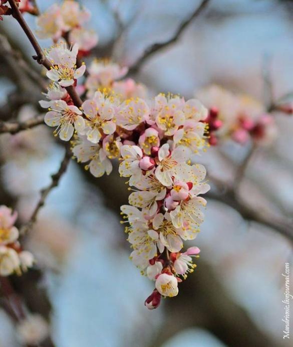 Весна в Черкасах: у мережі розмістили яскраві світлини