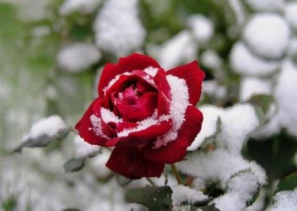 Похолодання та ймовірні заморозки очікують на Черкащині