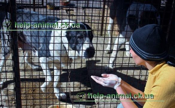 Господар скандальних алабаїв збирається відсудити собак