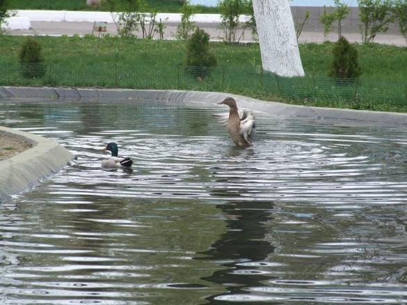 До черкаського фонтану прилетіли